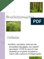 Briofitele(muşchii)