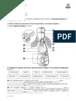 A circulação pulmonar e a circulação sistémica