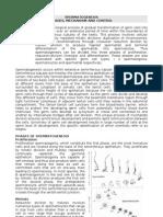 Devl Biol-Spermatogenesis