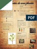 Partes de la Planta YTDM