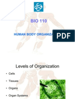 0 Human Body Organization