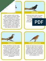 curiozitati despre pasarile calatoare