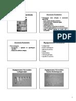 vet - anestesia - Equipamentos usados na anestesia inalatoria -1