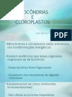aula_mitocondrias_cloroplastos