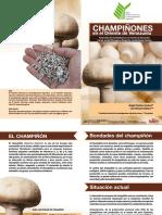 Champinones en El Oriente de Venezuela