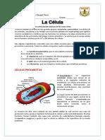 Ciencias Naturales-La Celula