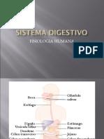 aula Sistema Digestivo