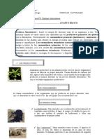 Guia N° 3 Cadena alimentaria Ciencias Naturales Cuarto Básico