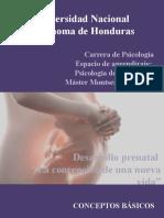 Estudio del desarrollo prenatal