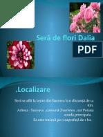 sera de flori Dalia Cosovanu