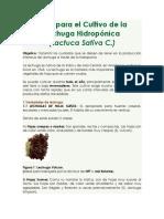 10. Guía para el Cultivo de la Lechuga Hidropónica
