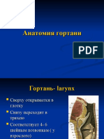 Анатомия гортани