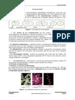 2. les procaryotes 2020_2021-converted