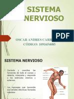 Sistema Nervioso- Oscar