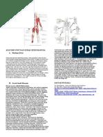 Anatomi Otot Dan Gerak Sendi Manusia