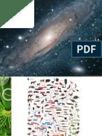 Aula Origem Das Plantas, A Conquista Do Ambiente Terrestre, Evolução Das Plantas