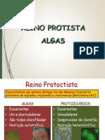 Reino Protoctista - Algas