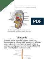 patologia del tracto digestivo