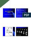 Neuroembriologia