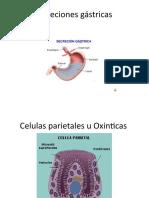 Fisiopatologia JEN. Tarea 2