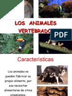 2º-Clase8-9-10-Lamina-Animalesvertebrados