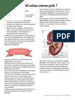 23. Sistema urinario