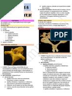 Semana 1A - Anatomía