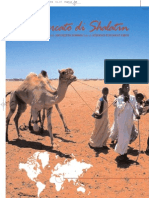 Egitto cammelli