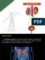 sistema urinario MUITO BOM-150522203628-lva1-app6891