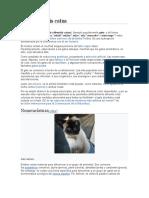 Felis silvestris catus (Gato)