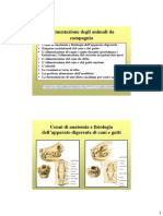 01a Cenni Di Anatomia e Fisiologia Dell'Apparato Digerente