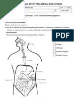 Atividade Sistema Digestório e Tecidos