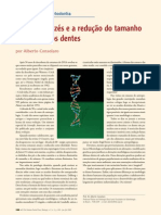 DNA, chipanzés e a redução do tamanho e número de dentes