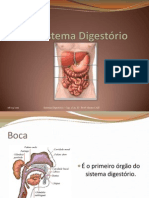 Sistema Digestório - 8º Anos