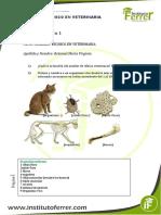 Modulo i - Auxiliar de Veterinaria - Actividad 1 Respuestas