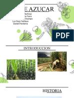 Caña de Azucar Agroindustria