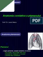 Curs 1 Anatomie corelativa