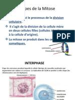 etapes_mitose