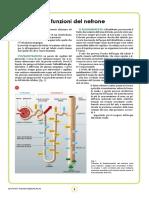 bio80_nefrone