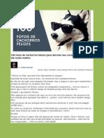 100 fotos de cachorros felizes para derreter seu coracao e deixar seu dia muito melhor