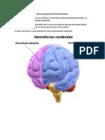 Estructura general de los hemisferios