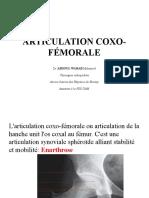 Articulation Coxo Femorale