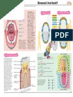Scheda_anatomia_della_bocca