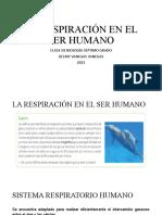 LA RESPIRACIN EN EL SER HUMANO