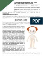 CIENCIAS NATURALES 4. SISTEMA OSEO