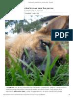 Cuáles son las plantas tóxicas para los perros - 10 pasos