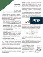 Resumo P1 - Orto