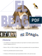 Presentacion Beagle mar 2011