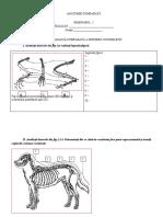 anatomia comparata 2