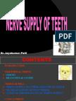 nerve supply of teeth